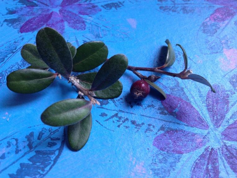 Corokia berry