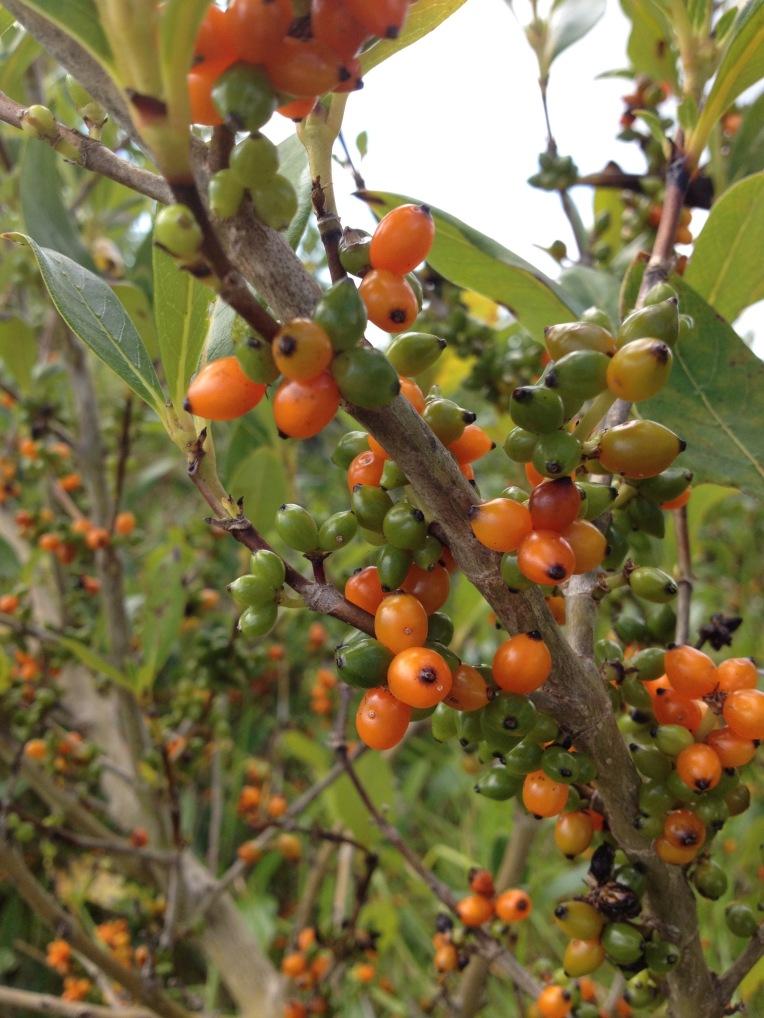 Bastion pt berries