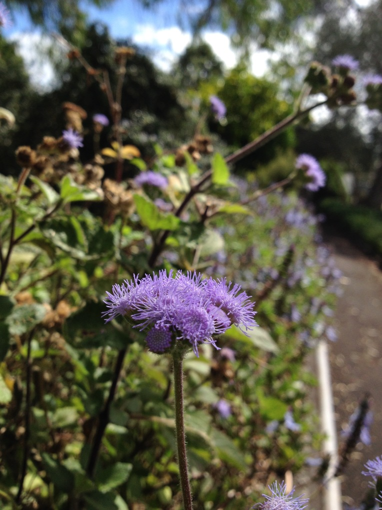 Sensory garden flowers