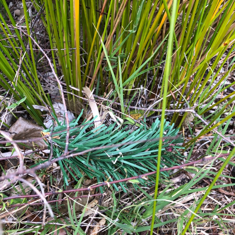 Plastic branch, Tahuna Torea