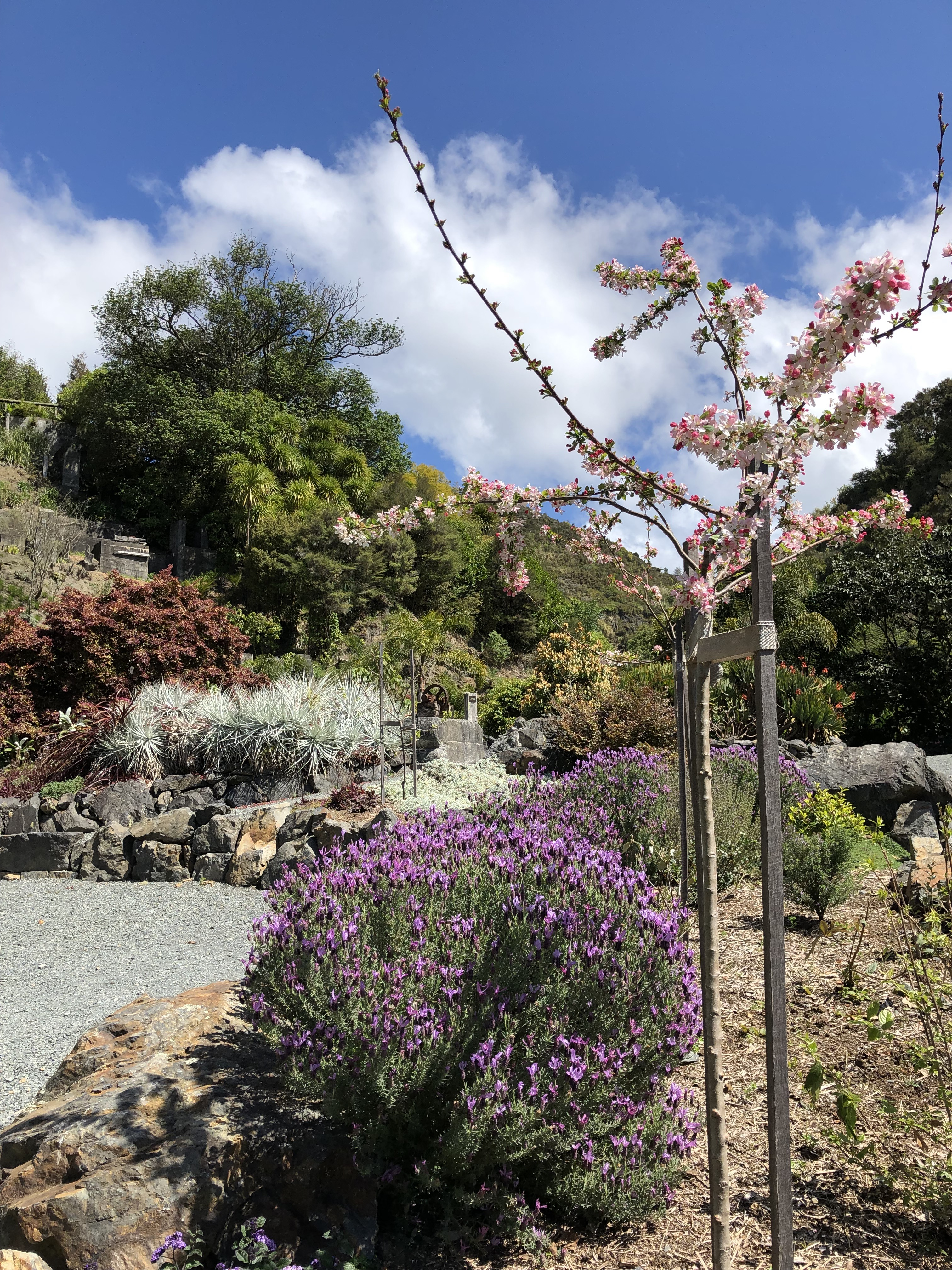 Quarry sensory garden
