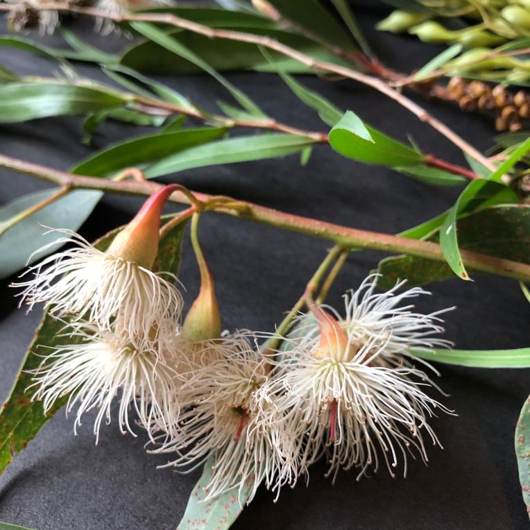 Gum blossoms half size